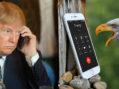 President Trump Receives Congratulatory Call From Bald Eagle