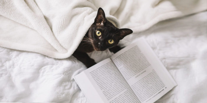 Study Finds 95% Of Cats Are Better Read Than Their Owners