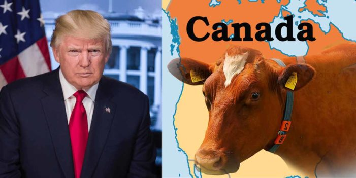 President Trump Swears Unholy Vengeance Upon All Canadian Cows