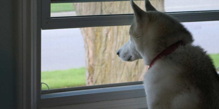 Dog Owner Shuts Front Door, Transforms Into New Human Never Seen Before
