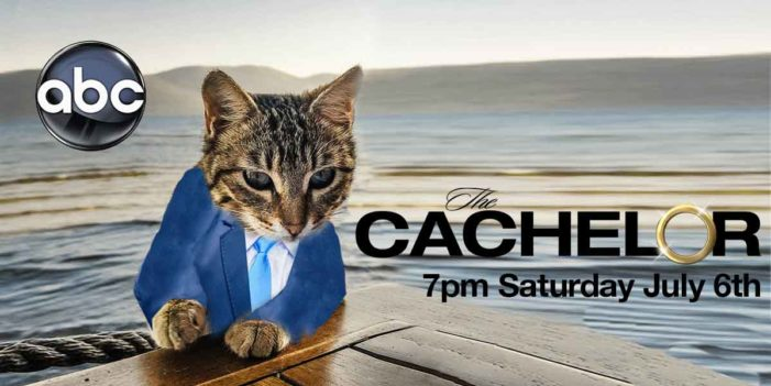 ABC Announces New Show For Summer 2020 – The Cachelor