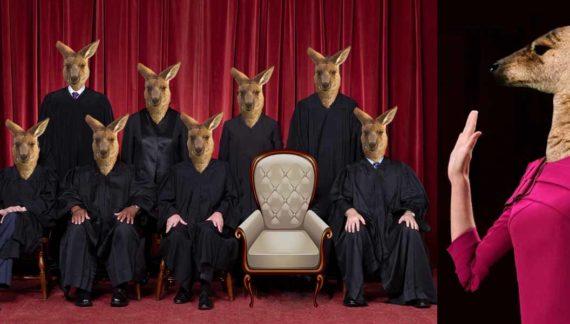 Kangaroo Court Prepares To Welcome Newest Member