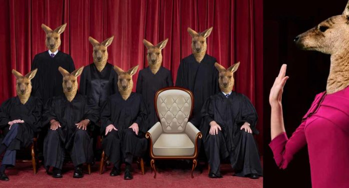 Kangaroo Court Prepares To Welcome Newest Member